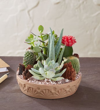 Cactus Dish Garden Growing Succulents Plants How to