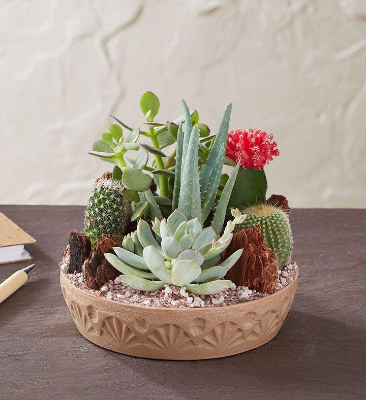 Cactus Dish Garden 1800Flowerscom 1828