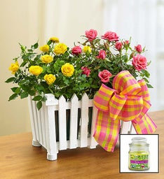 Summer Splendor Rose Garden + Free Candle