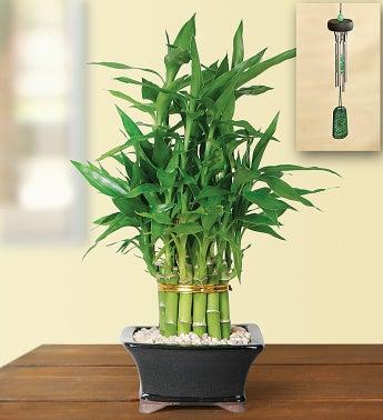 Pyramid Bamboo