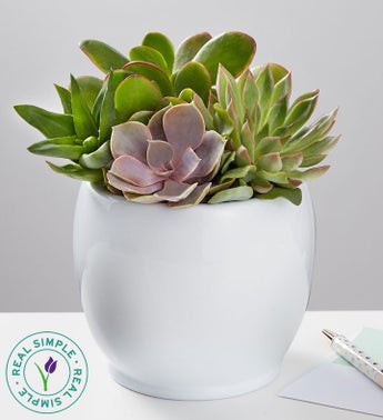 Succulent Garden by Real Simple