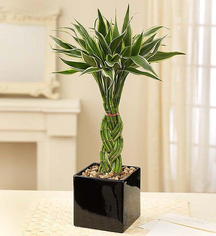 September - Modern Bamboo