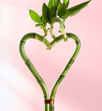 Heart Shaped Bamboo 1800flowers Com 18999