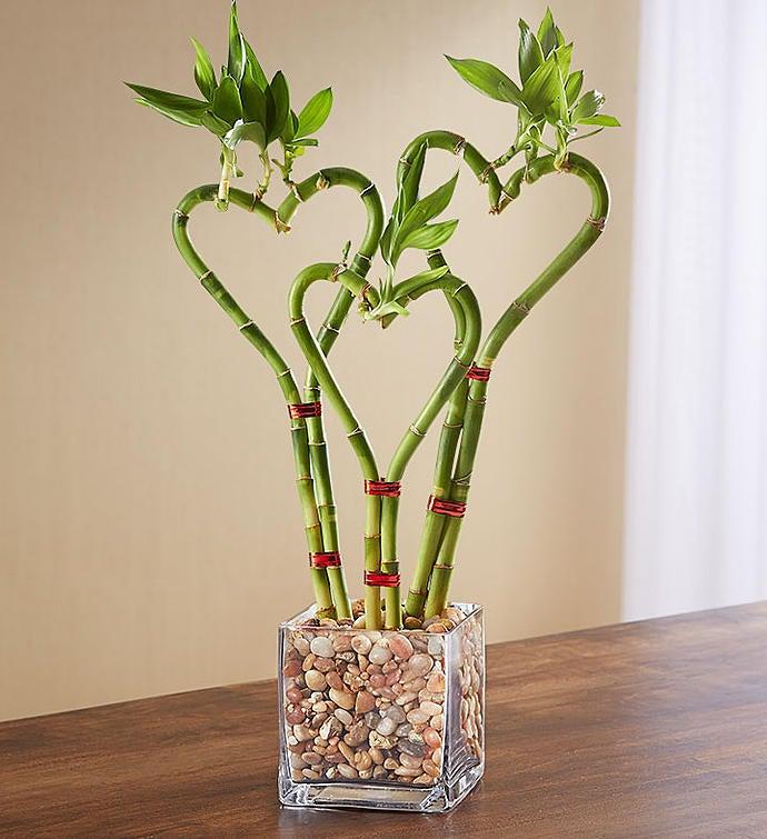 Heart Shaped Bamboo