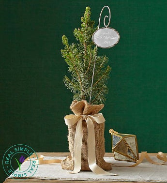 Real Simple® Colorado Spruce Small with Plaque