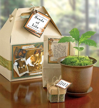 Seeds of Life Tree Kit