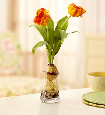 Orange Silk Tulips in Bud Vase