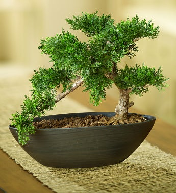 Faux Cedar Bonsai