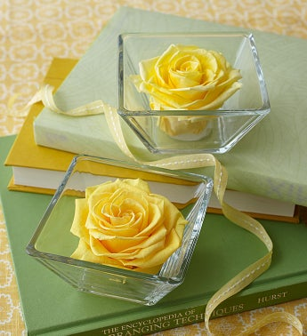 Infinite Rose Bloom Yellow