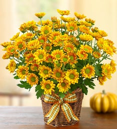 Fall Mum in Basket