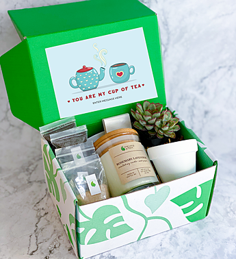 You Are My Cup Of Tea Succulent Gift Box