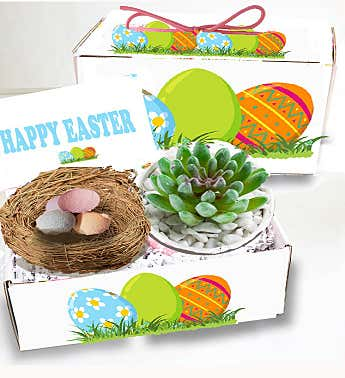 Easter Succulent Spa Gift