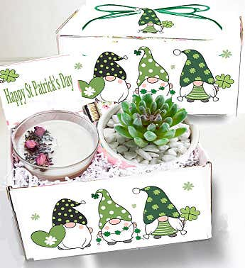 St Patrick's Day Spa Succulent Gift Box