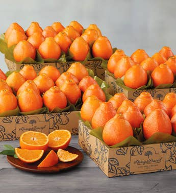 Western HoneyBells - Four Trays