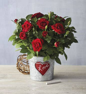 Red Mini Rose in Chalkboard Tin Bucket