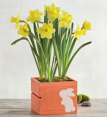 Daffodils in Bunny Crate